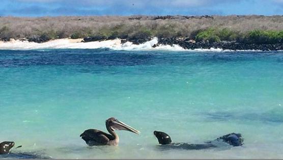 Fauna en Bahía Gardner Isla Española, Galápagos