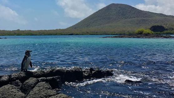 Vista del mar en la Isla Floreana en Galápagos