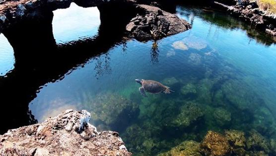 Isabela es la isla más grande del archipielago de Galápagos