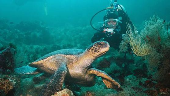 Buceo de Exploración en la Isla Marchena, Galápagos