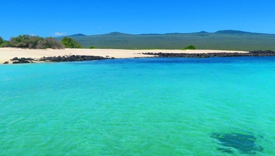 """Zona de Playa y Manglar """"El Manglesito"""""""