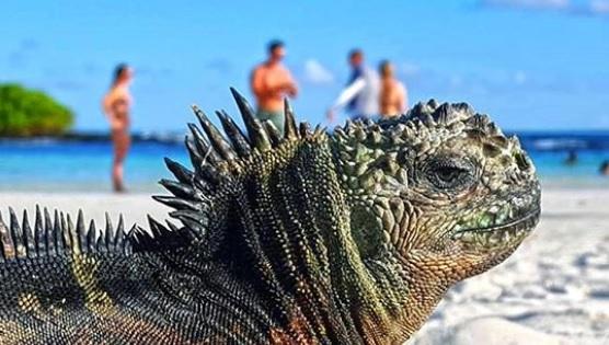 Bahía Tortuga en Galápagos