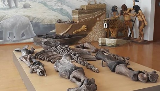 Museo paleontològico Megaterio