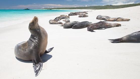 Playa de Bahía Tortuga en Santa Cruz, Galápagos