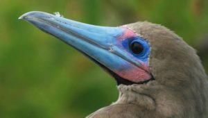 Aves en la Isla Genovesa