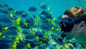 Buceo en la Isla Pinzón